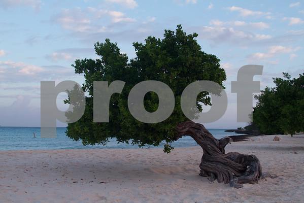 RJLM_WI  _88596  Aruba  2011-02