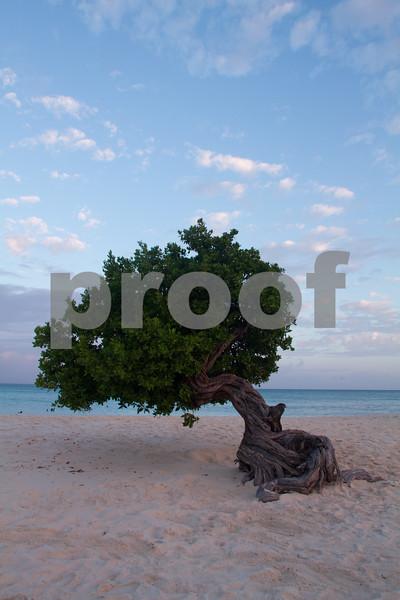 RJLM_WI  _88590  Aruba  2011-02