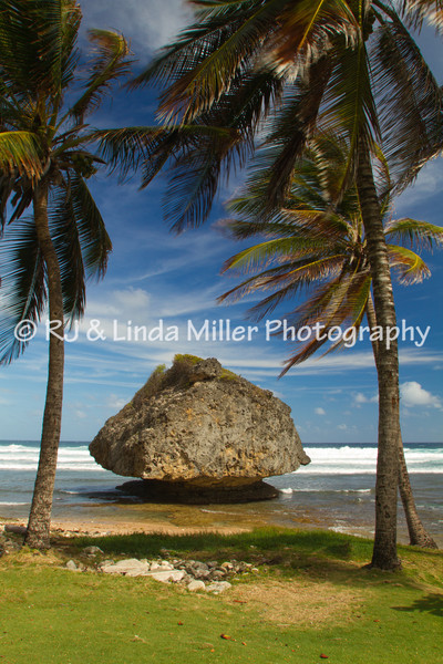 Bathsheba Cattlewash Beach, Barbados Windward Islands, Lesser Antilles, Caribbean, West Indies