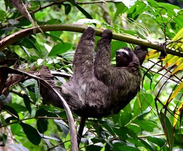 Gandoca Manzanillo National Wildlife Refuge