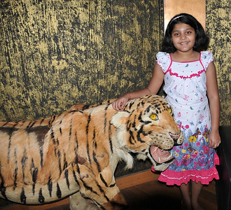Sudha and a real stuffed Bengal tiger