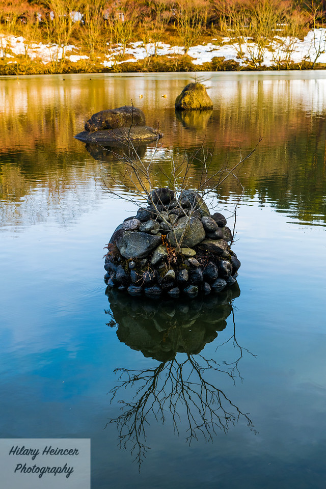 Koi Pond  Reflections