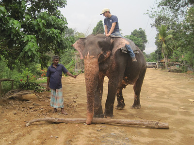 Ryan Iafigliola goes for an elephant ride.