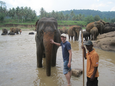Ryan Iafigliola mingles with the elephants.