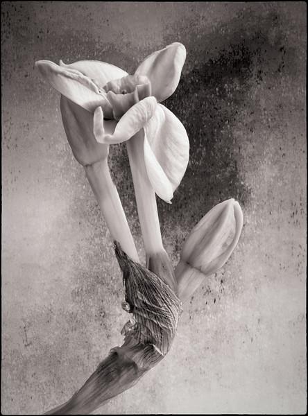 Starship Flower