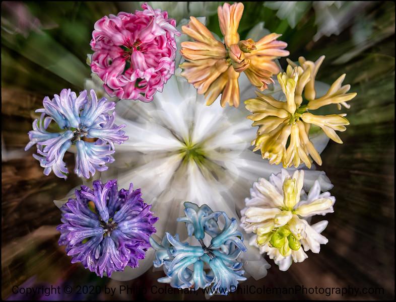 Nature's color Wheel
