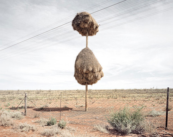 "Another instrument I made, the Toha, is based on the collective nests of the sociable weaver birds you find from the Cunene region in the south of Angola to the Kalahary desert in South Africa.  Dillon Marsh took a photo of one (pictured left); you can see the telephone wires going through at the top, but the birds build the nest around it.  Those telephone wires became the strings of the Toha (pictured below), but I brought them vertically to the base of the instrument.  I saw several of those nests empty because of the conflict in the 80s.  So the idea was to somehow evoke the spirit of the bird in the instrument as a way of asking them to come back.  But you'll notice in this photo that a fence was put up in front of the nest.  So the Toha responds to our romanticized and blurred idea of humans connecting with nature as well, and to one of the Golian Modes which is responsible for animals and flying.  Richard D. James (Aphex Twin) released an album of recordings I made with these instruments on his Rephlex label.  I've developed many other instruments through the Golian Modes which can be seen online:  <a href=""http://www.pangeiainstrumentos.org/"">http://www.pangeiainstrumentos.org/</a>"