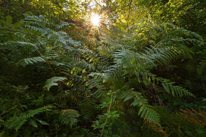La magia della bosco