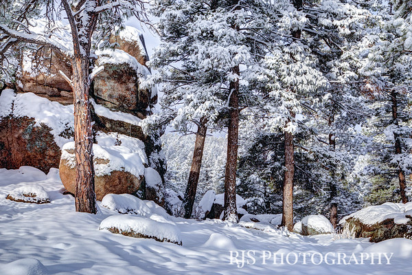 Pike National Forest in Winter