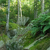 Maine Forest