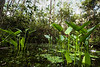 Swamp Lagoon