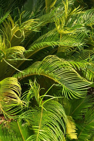 Monaco Ferns