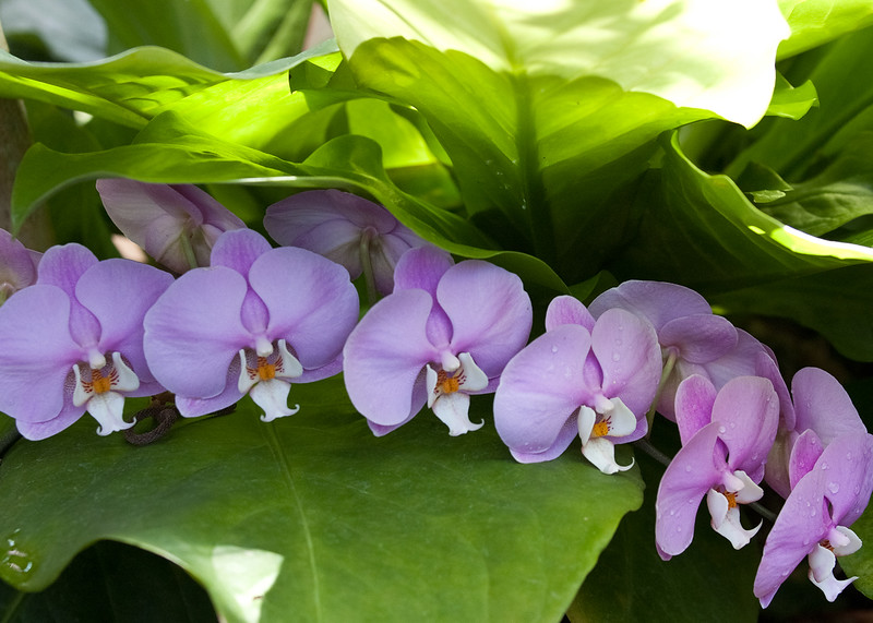 Perfect lavender orchids align
