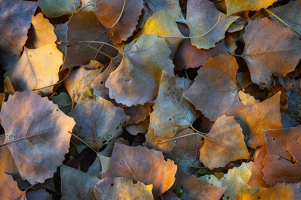 Fallen leaves glowing from reflected light off a nearby sunlit canyon wall