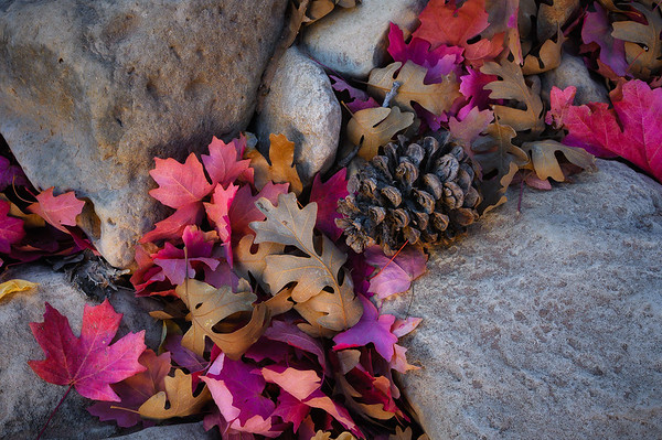 A small collection of fall found in Zion