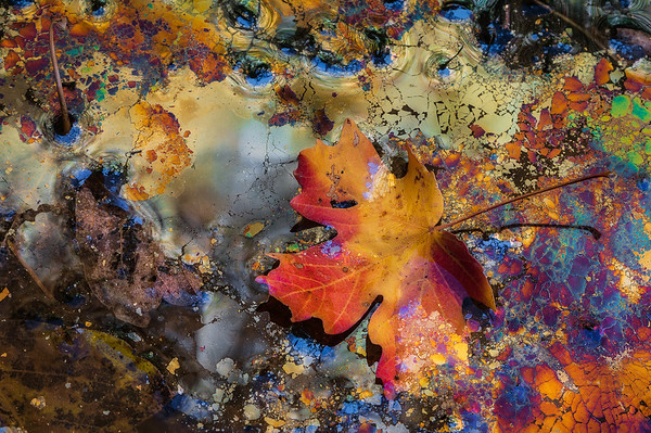 A solitary leaf rests in natural oils found in Zion