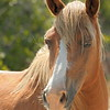 Wild Pony  (09_2425)