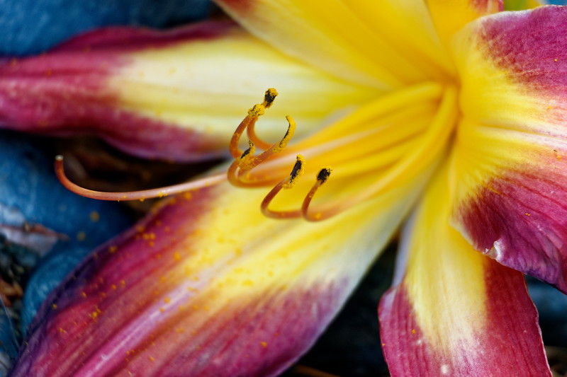 Lily (1168)