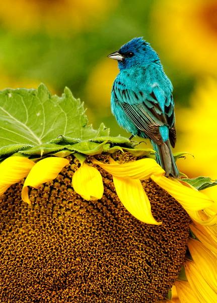 Sunflower with Bird