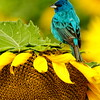 Sunflower with Bird