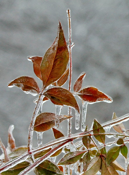 Locked in Ice