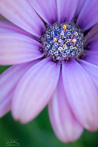 Inner Bouquet