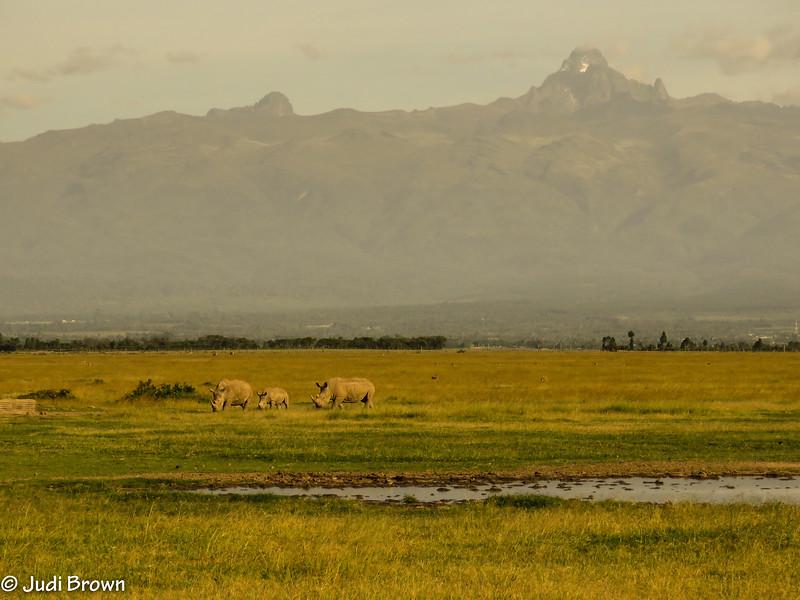 White rhino family with Mt. Kenya background.