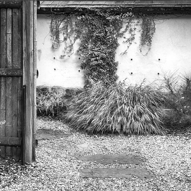 Into A Black and White Garden