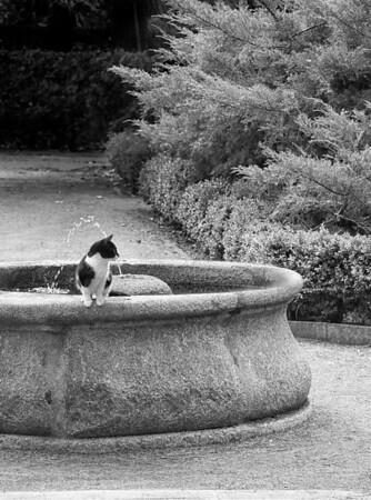 El Gato Jardin