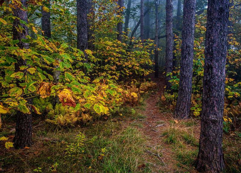 """An unnamed trail in the Dolly Sods Wilderness Area located in West Virginia's Monongahela National Forest.<br /> <br /> For Canvas Gallery Wraps of this image, please visit:  <a href=""""http://our-wv.com/photography/photographers/randall-sanger-photography/"""">http://our-wv.com/photography/photographers/randall-sanger-photography/</a>"""