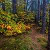 "An unnamed trail in the Dolly Sods Wilderness Area located in West Virginia's Monongahela National Forest.<br /> <br /> For Canvas Gallery Wraps of this image, please visit:  <a href=""http://our-wv.com/photography/photographers/randall-sanger-photography/"">http://our-wv.com/photography/photographers/randall-sanger-photography/</a>"