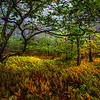"An autumn forest scene in the Dolly Sods Wilderness Area in West Virginia's Monongahela National Forest.<br /> <br /> For Canvas Gallery Wraps of this image, please visit:  <a href=""http://our-wv.com/photography/photographers/randall-sanger-photography/"">http://our-wv.com/photography/photographers/randall-sanger-photography/</a>"