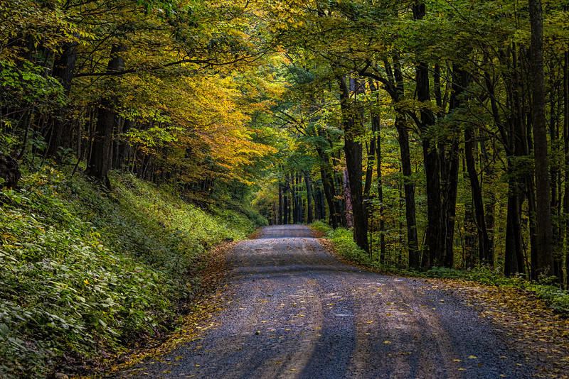 "Forest Road 19 in West Virginia's Monongahela National Forest.<br /> <br /> For Canvas Gallery Wraps of this image, please visit:  <a href=""http://our-wv.com/photography/photographers/randall-sanger-photography/"">http://our-wv.com/photography/photographers/randall-sanger-photography/</a>"
