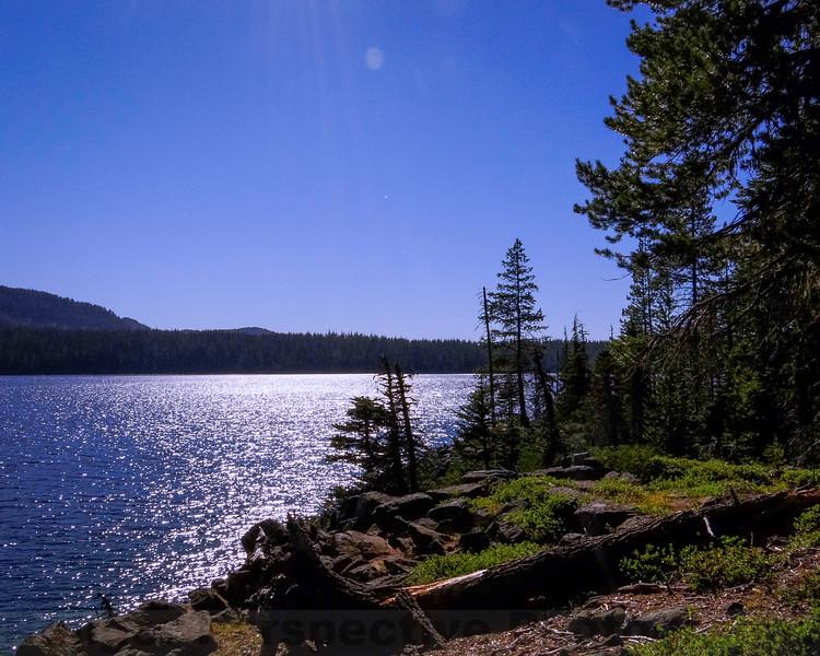 Along Waldo Lake Trail