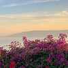 Sea and Bougainvillea