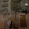 Suspended Orange Tree