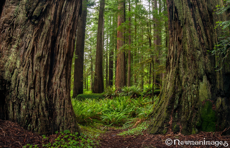 Prairie Creek Redwoods