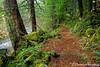 Trail Near Rogue Gorge