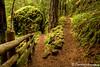 Trail to Fall Creek Falls