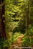 Oregon Redwoods Trail