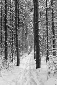 Snowy Trail #2