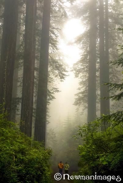 Redwood Stroll