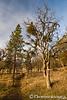 Roxyann Trail