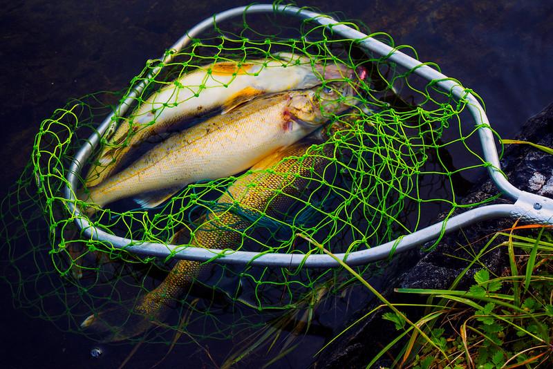 48goodfishingsmallestjpg.jpg