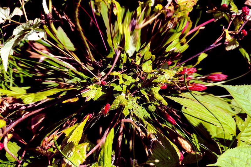 37aRaspeberry distortedsmallest.jpg