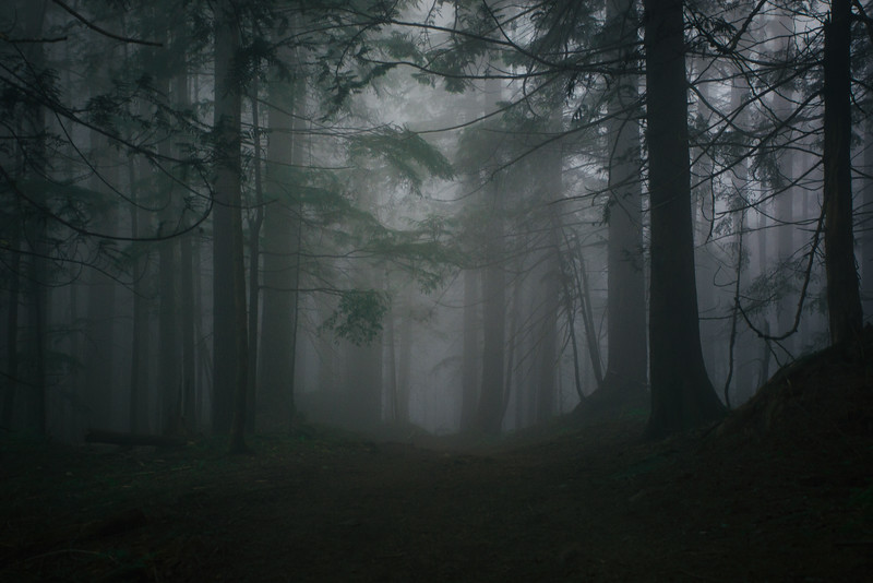 Typical Dark BC Coast Trail