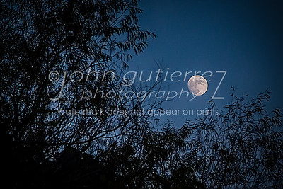 Moon behind leaves
