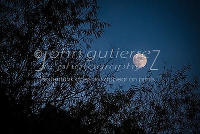 Moon behind leaves
