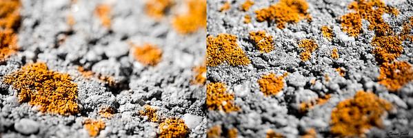 Rusted Concrete