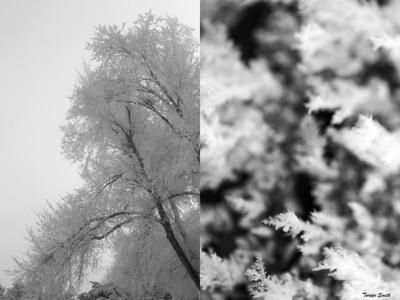 Winters Lean